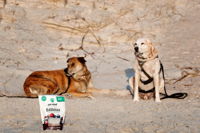 2travelingdogs - march2019 -50