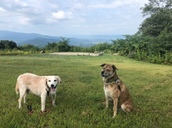 2 Traveling Dogs – Make Rescues The Breed Of Choice!®